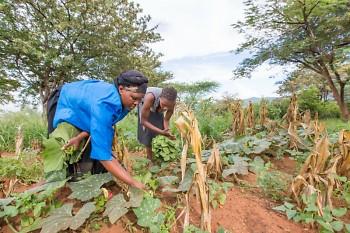 Farmers in Kenya