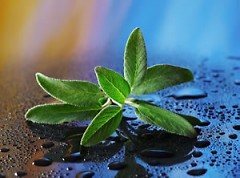 Sage, like aging, has been gracefully enhancing life on earth for a very long time.