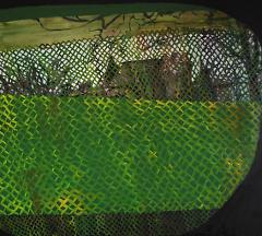 Peering Through (2013)