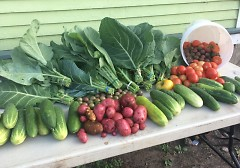Lots of food can be grown in small spaces!