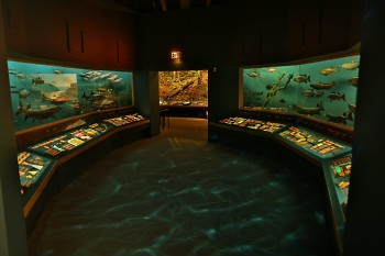 The Grand Rapids Public Museum's exhibition, West Michigan Habitats; reopening to the public on July 6.