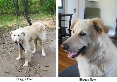 Shaggy - Before and After